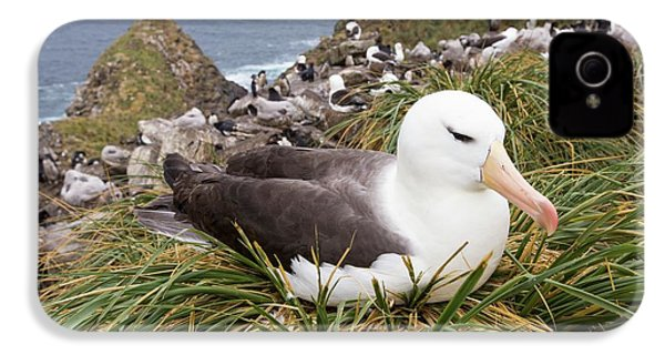 A Black Browed Albatross IPhone 4s Case by Ashley Cooper