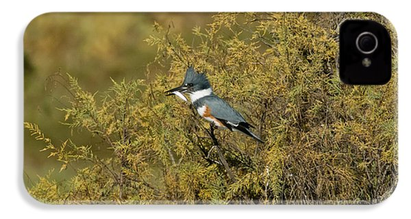 Belted Kingfisher With Fish IPhone 4s Case by Anthony Mercieca