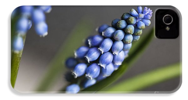 Grape Hyacinth IPhone 4s Case by Nailia Schwarz