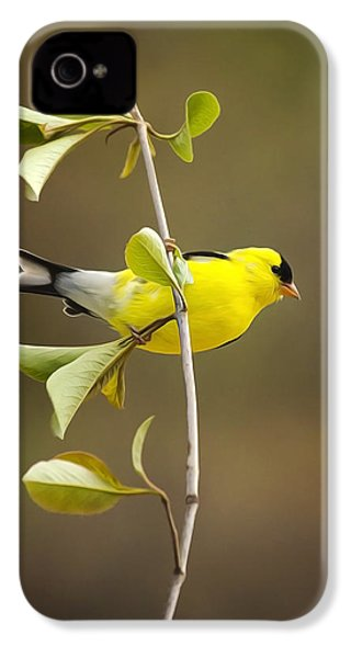 American Goldfinch IPhone 4s Case by Christina Rollo