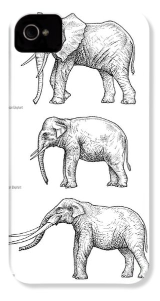 Elephant Evolution, Artwork IPhone 4s Case by Gary Hincks
