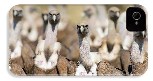 Griffon Vultures IPhone 4s Case by Nicolas Reusens