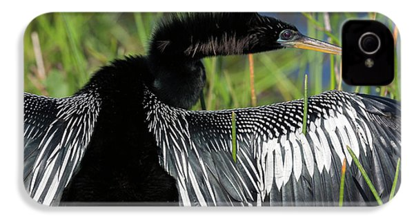 Usa, Florida, Everglades National Park IPhone 4s Case by Jaynes Gallery