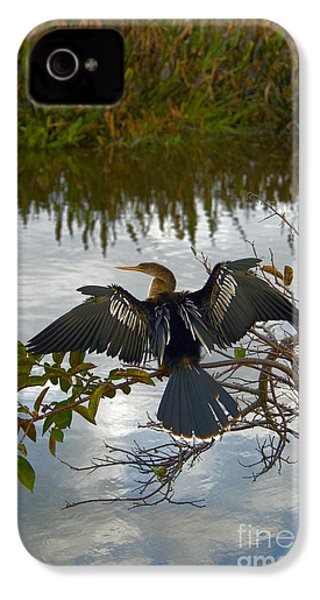 Anhinga IPhone 4s Case by Mark Newman