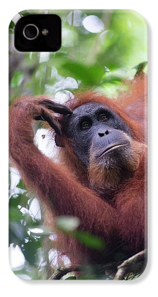 Sumatran Orangutan IPhone 4s Case by Scubazoo