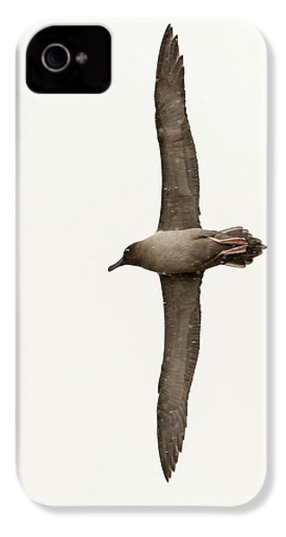 A Light Mantled Albatross IPhone 4s Case by Ashley Cooper