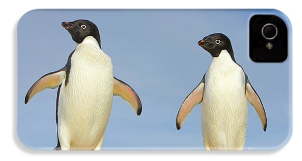 Adelie Penguin Duo IPhone 4s Case by Yva Momatiuk John Eastcott