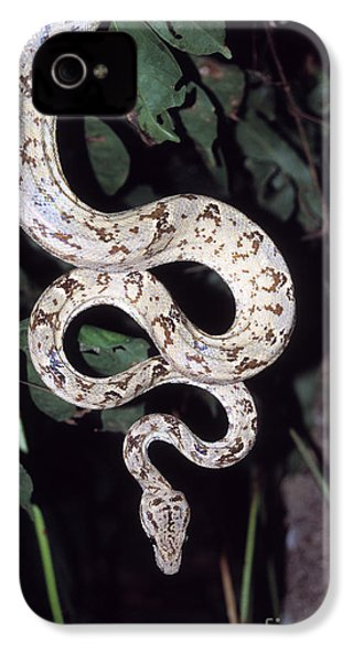 Amazon Tree Boa IPhone 4s Case by James Brunker