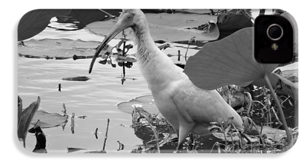 American White Ibis Black And White IPhone 4s Case by Dan Sproul