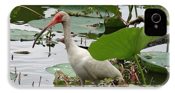 American White Ibis In Brazos Bend IPhone 4s Case by Dan Sproul