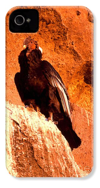 Andean Condor IPhone 4s Case by Art Wolfe