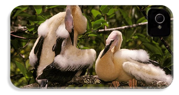 Anhinga Chicks IPhone 4s Case by Ron Sanford