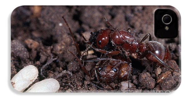 Ant Queen Fight IPhone 4s Case by Gregory G. Dimijian, M.D.