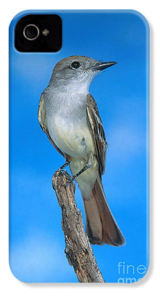 Ash-throated Flycatcher IPhone 4s Case by Anthony Mercieca