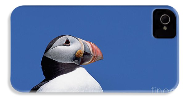 Atlantic Puffin In Breeding Colors IPhone 4s Case by Yva Momatiuk and John Eastcott