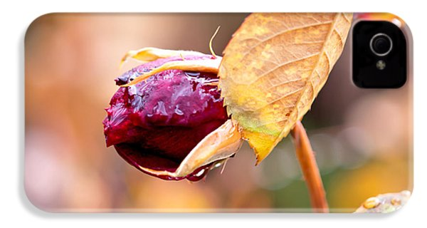 Autumn Rosebud IPhone 4s Case by Rona Black
