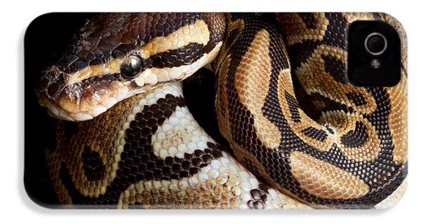 Ball Python Python Regius IPhone 4s Case by David Kenny