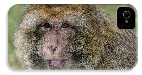 Barbary Macaque IPhone 4s Case by Nigel Downer