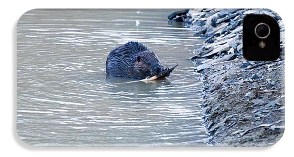 Beaver Chews On Stick IPhone 4s Case