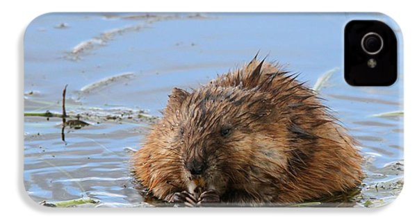 Beaver Portrait IPhone 4s Case