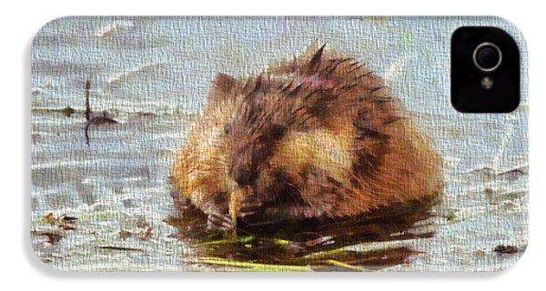 Beaver Portrait On Canvas IPhone 4s Case