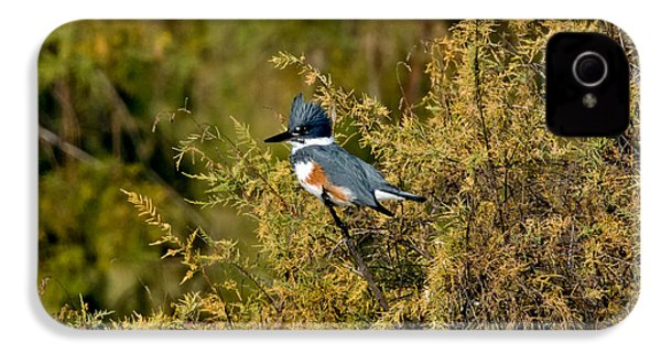 Belted Kingfisher Female IPhone 4s Case by Anthony Mercieca