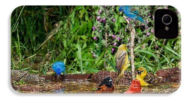 Birds Bathing IPhone 4s Case by Anthony Mercieca