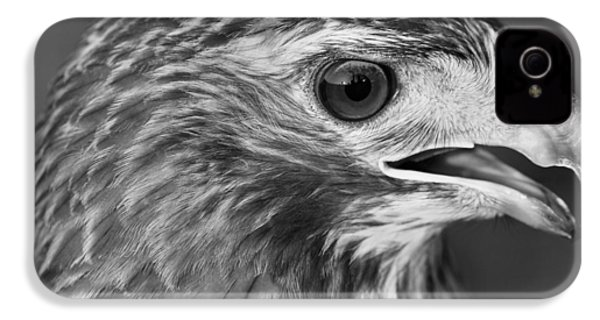 Black And White Hawk Portrait IPhone 4s Case by Dan Sproul