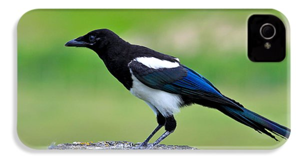 Black Billed Magpie IPhone 4s Case by Karon Melillo DeVega