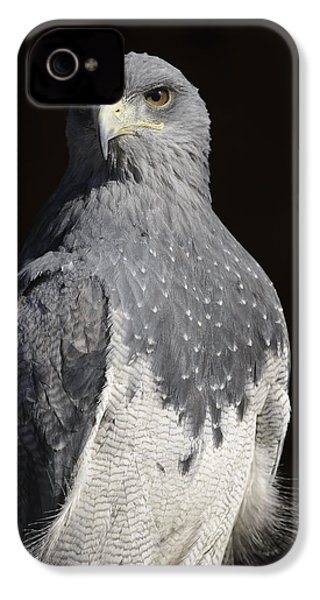 Black Chested Buzzard-eagle No 1 IPhone 4s Case by Andy-Kim Moeller