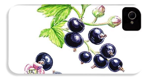 Blackcurrant Botanical Study IPhone 4s Case by Irina Sztukowski