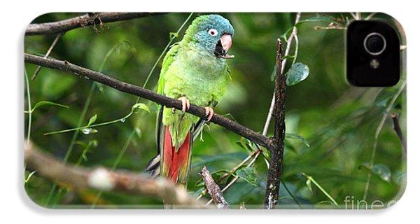 Blue Crowned Parakeet IPhone 4s Case by James Brunker