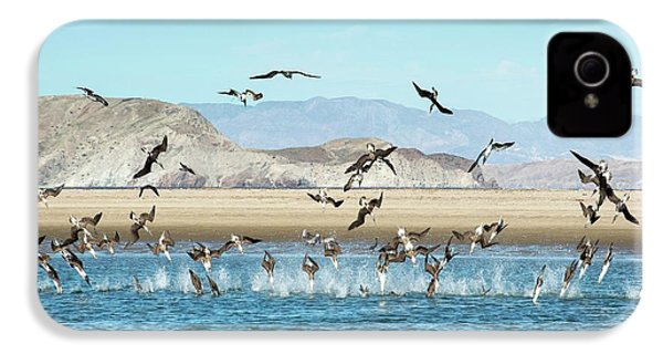 Blue-footed Boobies Feeding IPhone 4s Case by Christopher Swann