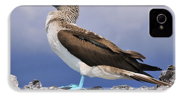 Blue-footed Booby IPhone 4s Case by Tony Beck