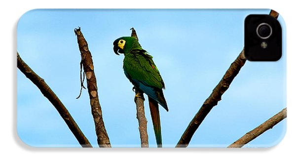 Blue-winged Macaw, Brazil IPhone 4s Case by Gregory G. Dimijian, M.D.