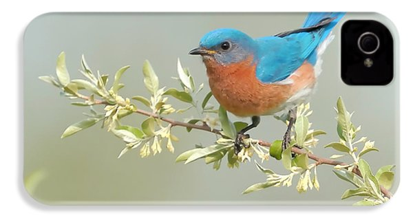 Bluebird Floral IPhone 4s Case by William Jobes