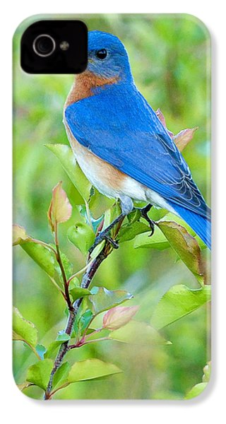 Bluebird Joy IPhone 4s Case by William Jobes
