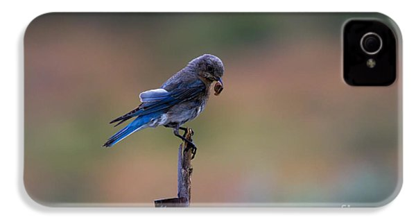 Bluebird Lunch IPhone 4s Case by Mike  Dawson