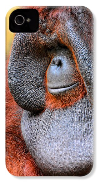 Bornean Orangutan Vi IPhone 4s Case by Lourry Legarde