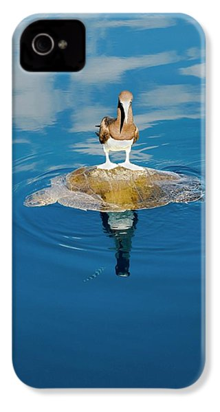 Brown Booby And Marine Turtle IPhone 4s Case by Christopher Swann