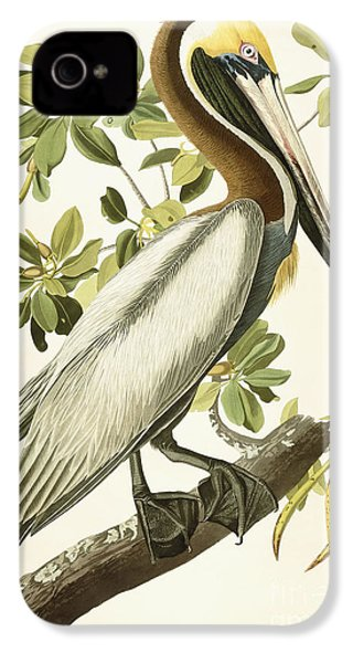 Brown Pelican IPhone 4s Case by John James Audubon