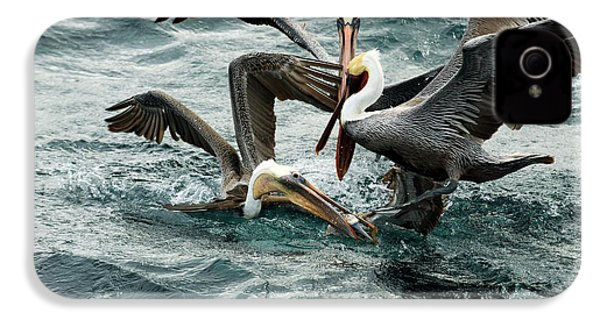 Brown Pelicans Stealing Food IPhone 4s Case by Christopher Swann