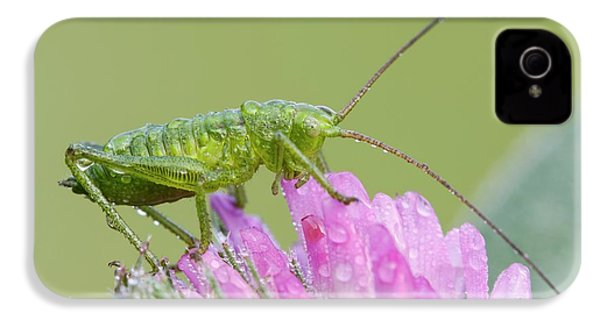 Bush Cricket IPhone 4s Case by Heath Mcdonald