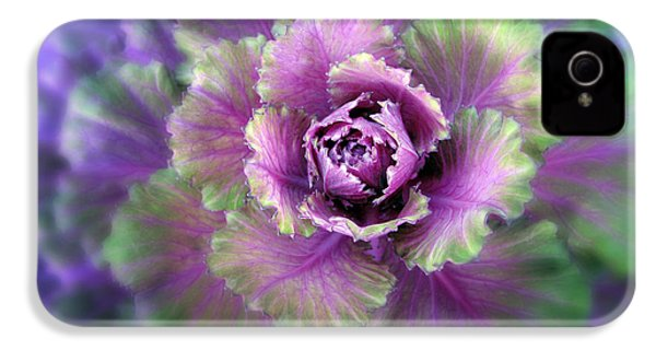 Cabbage Flower IPhone 4s Case by Jessica Jenney