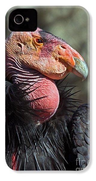California Condor IPhone 4s Case by Anthony Mercieca