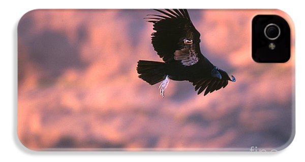 California Condor IPhone 4s Case by Art Wolfe