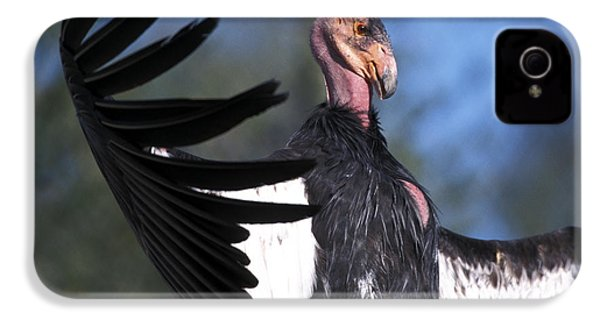 California Condor IPhone 4s Case by Mark Newman