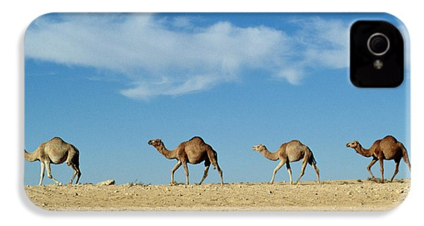 Camel Train IPhone 4s Case by Anonymous