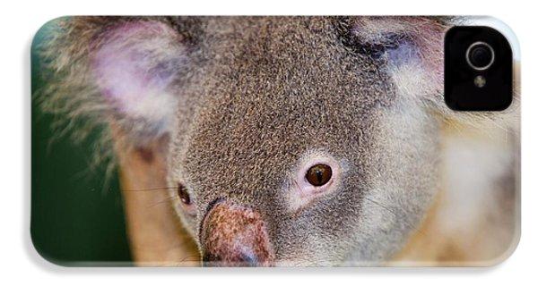 Captive Koala Bear IPhone 4s Case by Ashley Cooper