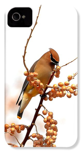 Cedar Wax Wing IPhone 4s Case by Floyd Tillery